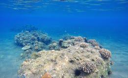 Landskap för djupt hav och för korallrev Djur för korallrev Arkivbild