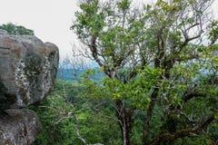 Landskap för Forest Green bergskog Landskap för skog för skog för dimmigt berg fantastiskt Royaltyfri Bild