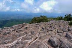 Landskap för Forest Green bergskog Landskap för skog för skog för dimmigt berg fantastiskt Royaltyfria Bilder