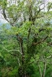 Landskap för Forest Green bergskog Landskap för skog för skog för dimmigt berg fantastiskt Royaltyfri Fotografi