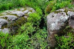 Landskap för Forest Green bergskog Landskap för skog för skog för dimmigt berg fantastiskt Royaltyfri Foto
