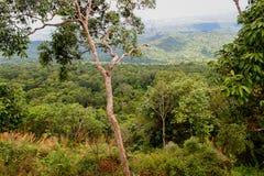 Landskap för Forest Green bergskog Landskap för skog för skog för dimmigt berg fantastiskt Royaltyfria Foton