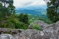 Landskap för Forest Green bergskog Landskap för skog för skog för dimmigt berg fantastiskt Arkivbild