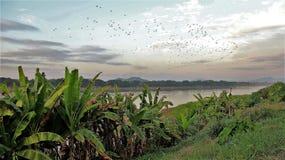 Landskap för gräns Laos och Thailand arkivbild