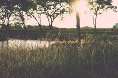 Landskap för gräsfält Arkivbilder