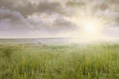 Landskap för gräsfält på soluppgång arkivfoto