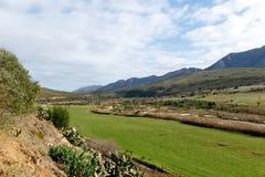 Landskap för grönt gräs i Kareedouw Royaltyfri Bild