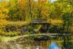 Landskap för höstskogreflexion Skog, damm & fotbro royaltyfria foton