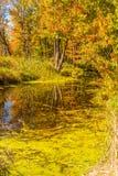 Landskap för höstskogreflexion Skog och ett damm royaltyfria bilder