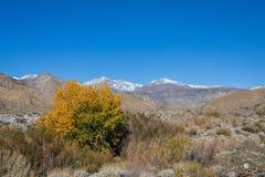 Landskap för Kalifornien öken royaltyfri fotografi