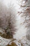 Landskap för lövfällande träd under vinter Arkivfoto