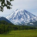 Landskap för landskapsommarberg och gräsplanskogav Kamchatka Royaltyfri Foto