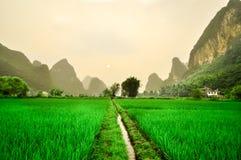 Landskap för Li flodberg i Yangshuo ricefield Royaltyfri Bild