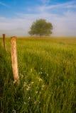 Landskap för morgon för vår för Cades liten vik dimmigt av ängen, träd och staketet. Arkivfoto