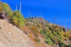 Landskap för Mt St Helens Fotografering för Bildbyråer