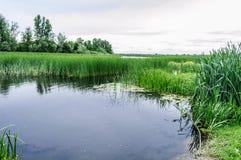 Landskap för naturreserv Säv som reflekterar i en flod Arkivfoto