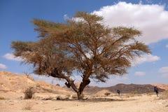 Landskap för Negev öken Arkivbild