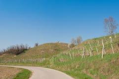 Landskap för Prosecco vårvingårdar Arkivbild