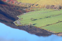 Landskap för sjövattenjordbruksmark royaltyfria bilder
