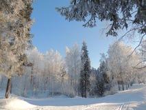 Landskap för skog för vintersnösolljus Arkivbild