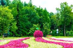 Landskap för sommargata - blomsterrabatten med att landskap beståndsdelen i formen av det stora äpplet som täckas med den rosa be Royaltyfri Bild