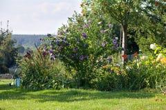 Landskap för sommarträdgårdträdgård, galler i bakgrunden Royaltyfri Foto