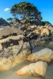 Landskap för stenig strand, Nya Zeeland Ett träd uppe på en hög av stenblock fotografering för bildbyråer