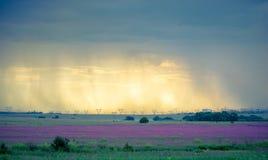 Landskap för Thunderstormy skymningeftermiddag, Rietvlei naturreserv, Sydafrika royaltyfri fotografi