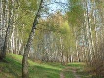 Landskap för Tipical ryssvår Arkivbild