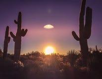 Landskap för träd för Arizona ökenkaktus arkivfoton