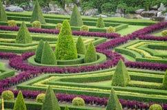 Landskap för träd för dekorativa växter tropiskt i naturträdgård Royaltyfri Foto