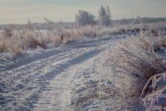 Landskap för väg för vintersnöskog Skogväg i vintersnösäsong royaltyfria bilder