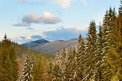 Landskap för vinterCarpathians berg Royaltyfria Foton