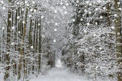 Landskap för vinterskogväg Royaltyfria Bilder