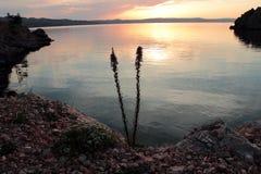 Landskap från den kroatiska stranden Fotografering för Bildbyråer