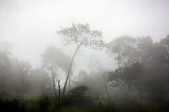 Landskap från det Indonesien berget Arkivbilder