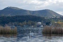 Landskap från Orestiada sjön av Kastoria, Grekland Med en svan arkivbilder