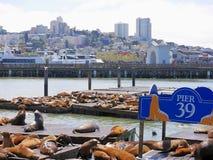 Landskap från pir 39 i San Francisco med sjölejon som vilar på träplattformar som förbiser bergigt landskap för stads` s Royaltyfri Foto