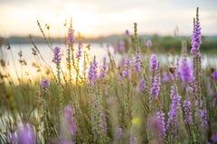 Landskap från sydliga högländer NSW fotografering för bildbyråer