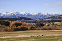 Landskap för södra ö, Nya Zeeland Royaltyfri Foto