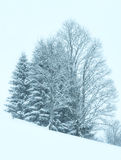 Landskap för snöfall för vinterberg dimmigt Arkivfoto