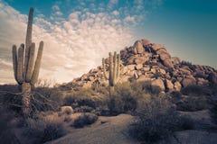 Landskap för träd för Arizona ökenkaktus Royaltyfri Bild