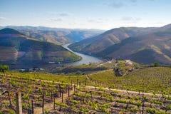 Landskap för vingårdar för portvin Arkivbilder