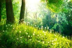 Landskap. Grönt gräs och träd Royaltyfri Bild