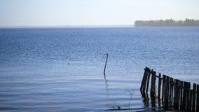 Landskap gryning över vattnet, flod, ström naturlig sommarwallpaper för abstrakt morgon vila på en flodstrand stock video