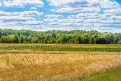 Landskap härliga moln över ett stort fält nära skogen Arkivfoto