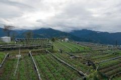 Landskap i alishan mountian Arkivbilder