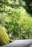 Landskap i alishan mountian royaltyfri fotografi