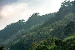 Landskap i alishan mountian arkivfoton