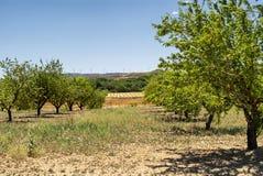 Landskap i Aragon på sommar royaltyfria bilder
